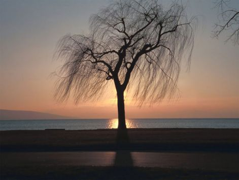 ebony-tree-sunset.jpg