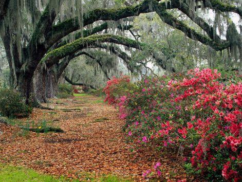 live-oak-trees.jpg