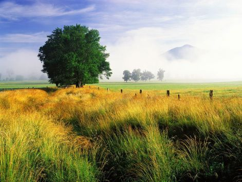oaklandscape.jpg