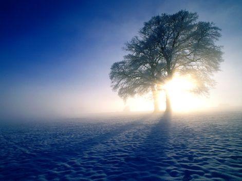 oaktreeamazing.jpg