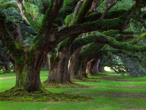 oaktreepicture.jpg