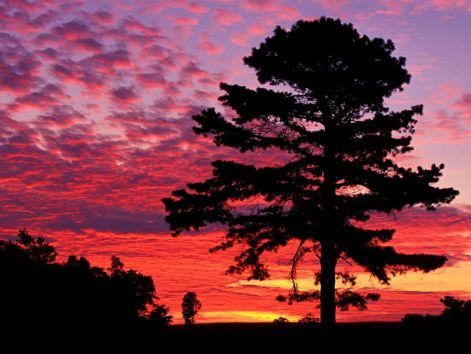 pinetreesunset.jpg