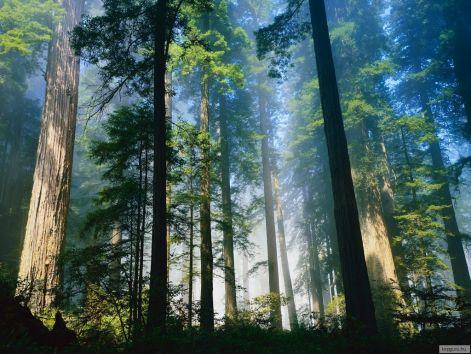 redwood_nemzeti_park.jpg