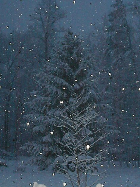 snowtree3.jpg