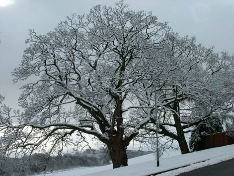 sycamore-picture.jpg