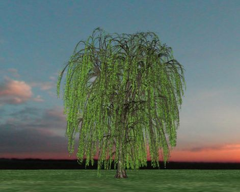 weeping-willow.jpg