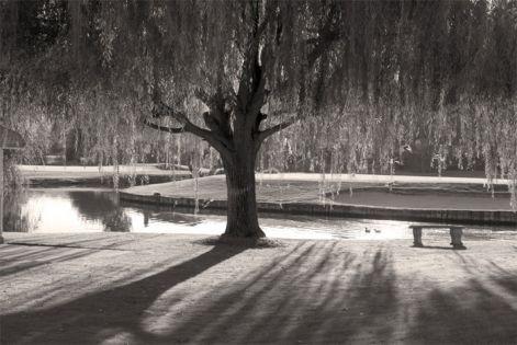 willow-black-white.jpg